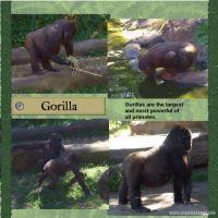 Taronga-Zoo-003-Page-4.jpg