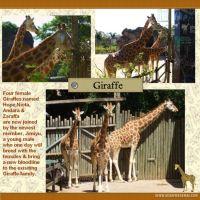 Taronga-Zoo-004-Page-5.jpg