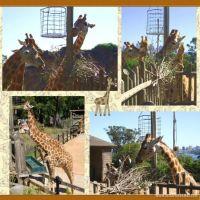 Taronga-Zoo-005-Page-6.jpg