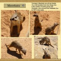 Taronga-Zoo-006-Page-7.jpg