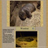 Taronga-Zoo-007-Page-8.jpg