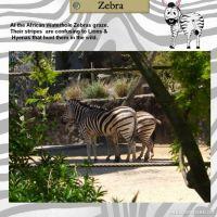 Taronga-Zoo-008-Page-9.jpg