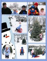 Winter-04-05-002-Xmas-tree-hunt-p2.jpg