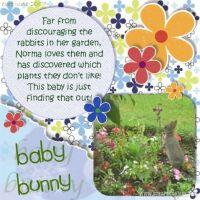 baby_bunny_479x479.jpg