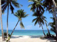 boracay_palm_trees1.jpg