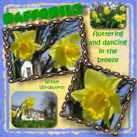 daffodils_479x479.jpg
