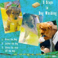 dogwash-p001.jpg