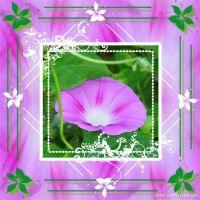 kp-flower.jpg