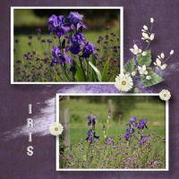 mundulla_garden_-_mg2.jpg