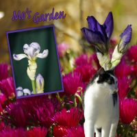 mundulla_garden_-_mg3.jpg