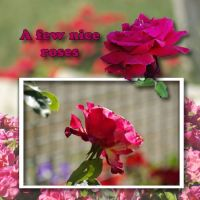mundulla_garden_-_mg4.jpg