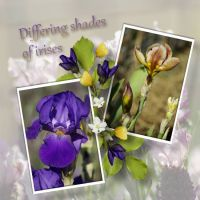 mundulla_garden_-_mg6.jpg