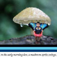 mushroom-swing.jpg