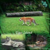 tiger_island.jpg