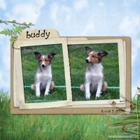 Buddy-002-Page-3.jpg
