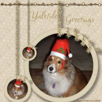 December-2008-_3-005-Maggie-in-Santa-Hat.jpg