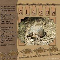 Blooming-Desert-006-Tortoise.jpg