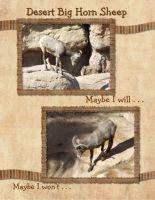 Desert-Museum-006-Page-7.jpg
