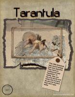 Nature-000-Page-1-Tarantula.jpg